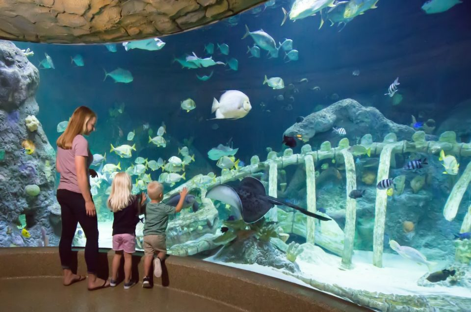 Explore Kansas City with Special Discounts to Attractions